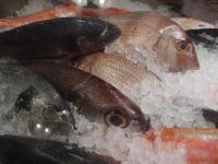Naxos_pesce